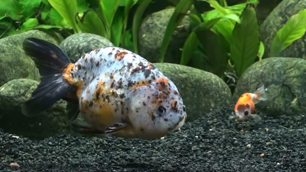 http://akvarium.ucoz.ua/_si/0/65295275.jpg